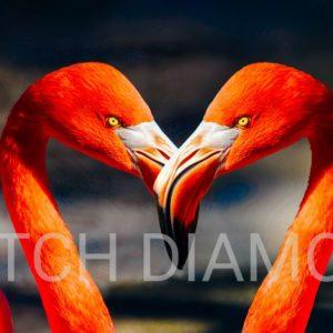 Flamingos Collection 1