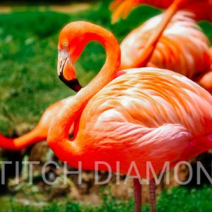 Flamingos Collection 2