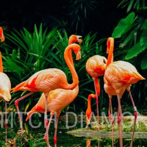 Flamingos Collection 4