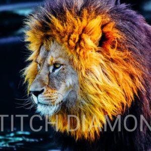 Lions Collection 6