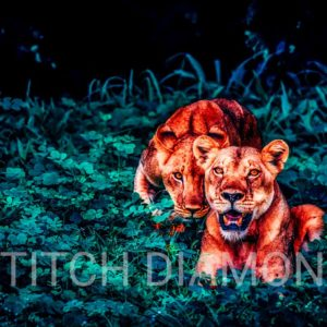 Lions Collection 7