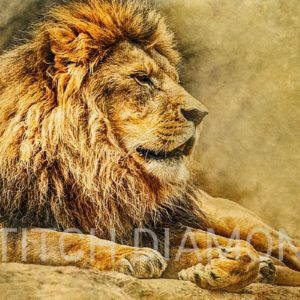 Lions Collection 8